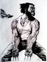 Wolverine by Aleiino