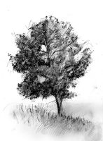 Alone Tree sketch by doubleagent2005