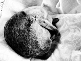 Soft kitty, warm kitty, little ball of fur by Nonemie