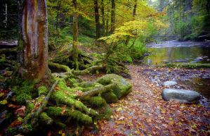 Autumnal riverside.. by Phototubby