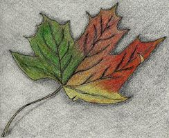 Fall Maple Leaf by sweetmarly