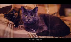 the cat and the cat by SwaEgo
