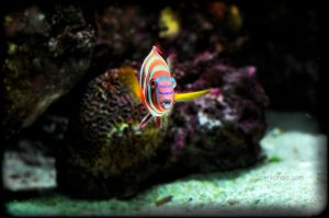 Aquatic Life 10 by cenkphoto