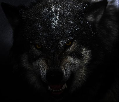 Wolf by TheStro