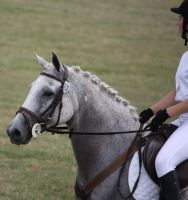 STOCK Showjumping 462 by aussiegal7