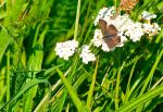 Butterfly 1 by Paddy84