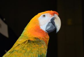 Magnificent Macaw (7) by IsabellaNY