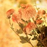 indian summer by ivadesign