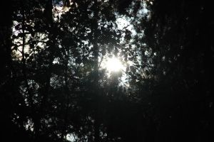 Sun through the trees 4 by LunaticNate