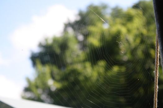 Spider Web by geminiswede