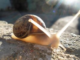 Snail on a Wall 3 by amydrewthat
