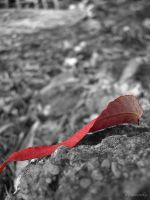 Red Autumn by moonik9