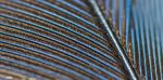 Blue Jay Feather 3 by Nini1965