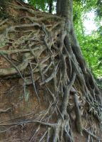 Roots by AlissaDStock