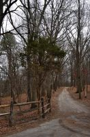 Wooded Dirt Road 2 by FairieGoodMother