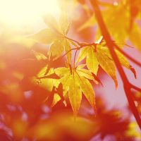 sunny leaves today. by simoendli