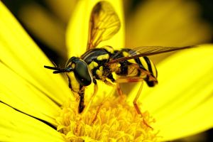Eating Pollen Series 1-3 by dalantech