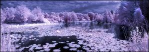Arboretum-Pano II Infrared... by MichiLauke