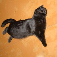 Anfisa the flying cat 2 by Panopticon-Stock