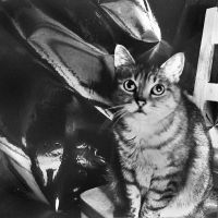 Cat and abstract photographer by kopalov