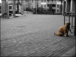 Chained Dog by SilverVince