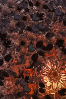 Floral BG 02 by ALP-Stock