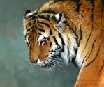 Distant Thought - Amur Tiger by Nambroth