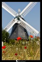 poppys and a windmill by Mondkringel