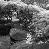 Japanese Rock Garden by Teakster