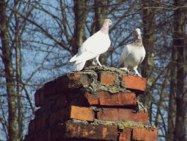 on the chimney by Croiea