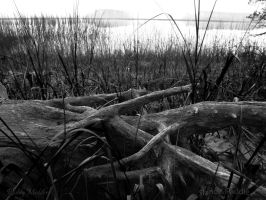 Textures of Driftwood by PaddleGallery