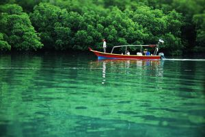 mangrove by MisS-DxB