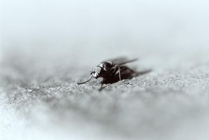 jack the fly by redgreenboo