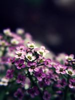 .violet. by witchlady750
