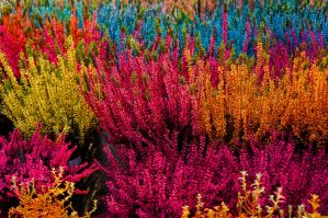 Colorful Plants by Dspatzier