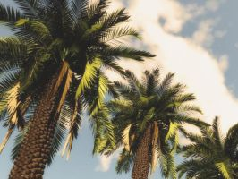 TreeLegs - Palms by ExtremeProjects