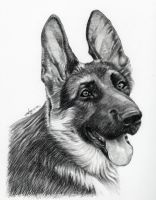 Charcoal Dog by ajgrier