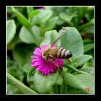 Busy Bee 2 by kitty333
