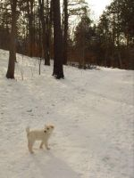 Little dog, in a big world by Emzoid