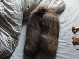 Silver fox tails SOLD by Lot1rthylacine
