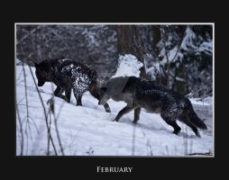 February by deadwolf140407