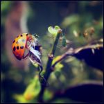 Little Creatures 042 by Frank-Beer