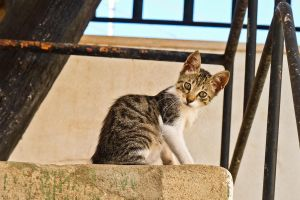 Little cat by Sonia-Rebelo