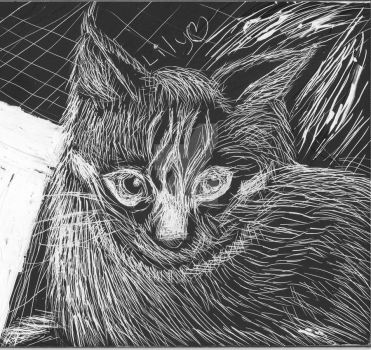 Cat Scratchboard by frubarulez1