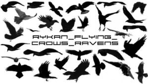 Ryk_Flying_Crows_Ravens brushs by Rykan