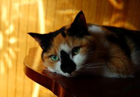 Miss Patches II by IsabellaNY