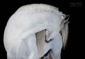 White on black by Olga5