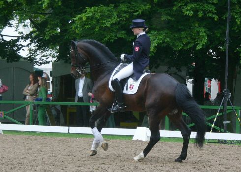 Dressage Canter Stock 02 by LuDa-Stock