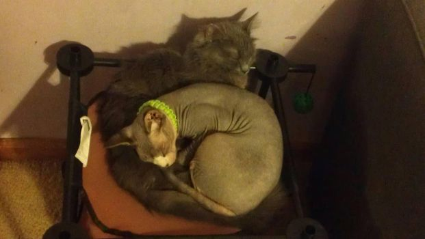 My Family's Cats Snuggling by The-Double-U