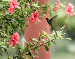Humming Bird flying by GeorgeAmies